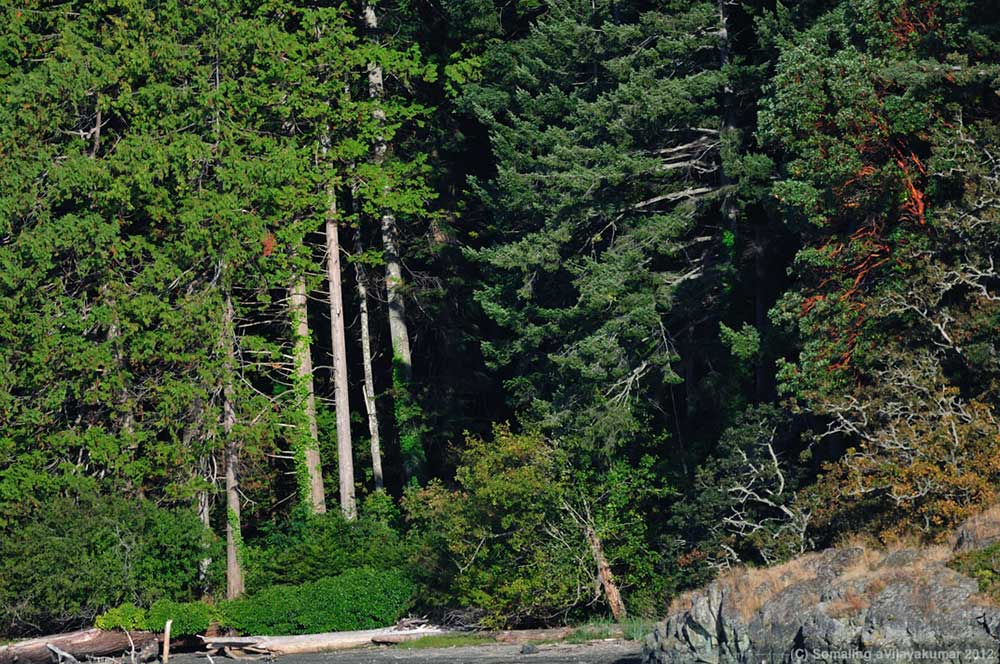 Ecosystems In Peril: The Coastal Douglas-fir forests of ...  Douglas Fir Forest